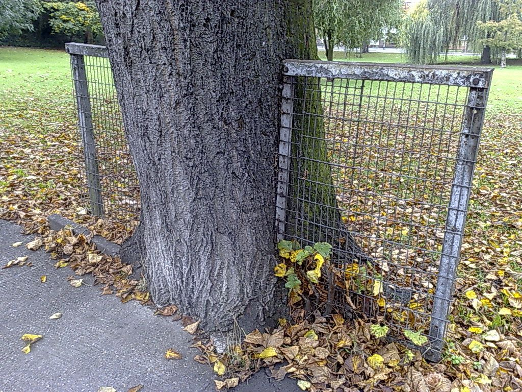 A tree growing around a fence