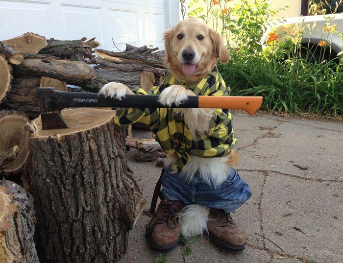 Dog chopping wood